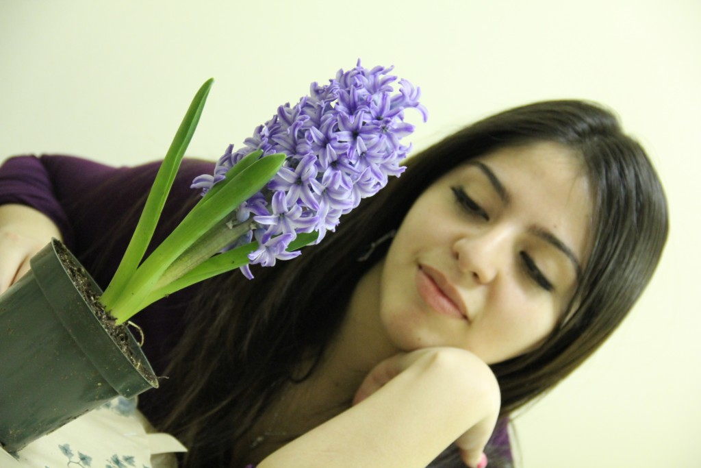 A lavender plant for Tania
