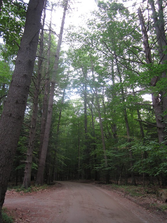 forest in lake george