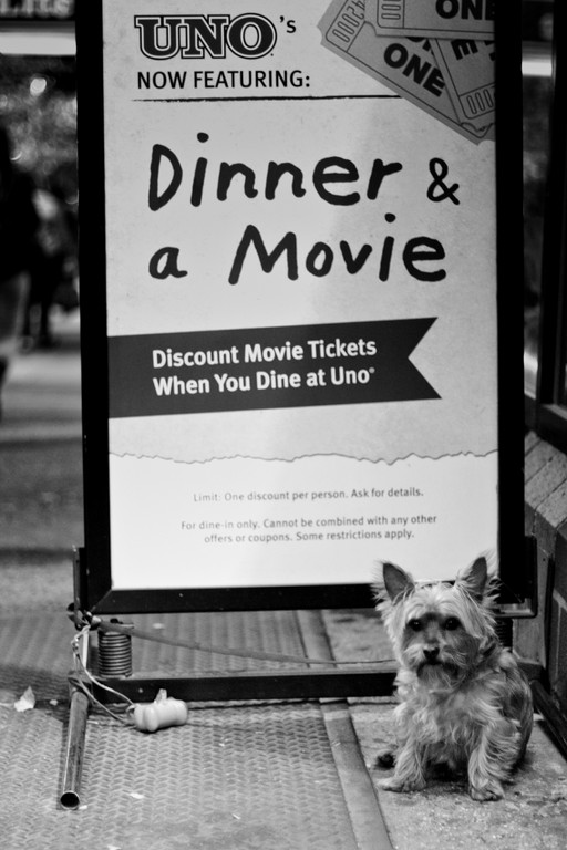 diner and a movie dog